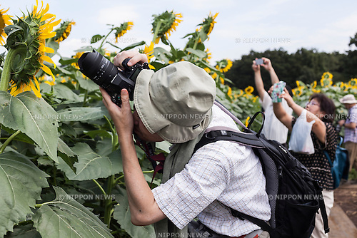 Visitors take pictures of the sunflowers at the ''Kiyose sunflower festival'' on August 19, 2015, Tokyo, Japan. About 100,000 sunflowers are in full bloom at the Kiyose sunflower festival which is  is held from August 16 to 30 this year. (Photo by Rodrigo Reyes Marin/AFLO)