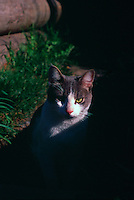 Domestic Cat sitting in Shade and Sunlight