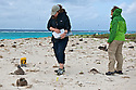 Volunteers monitor the Black-footed Albatross plot on Sand Island in Midway Atoll.  Without the help of volunteers we'd never know the statistics of survival and species trends.<br />