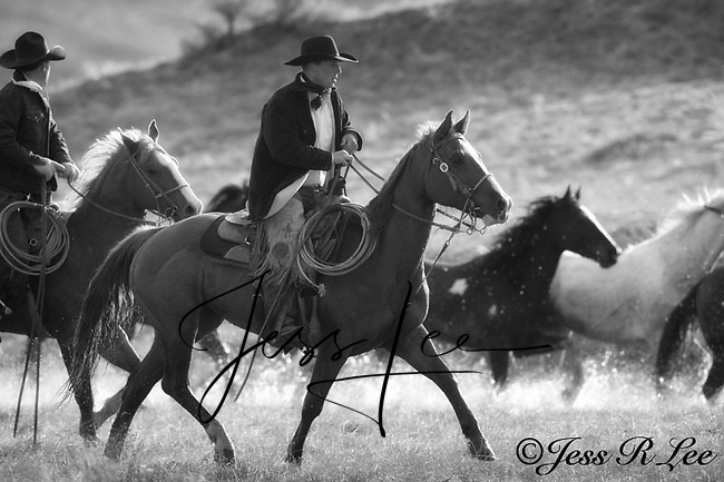 A photo of two wranglers driving some ranch horses back to the ranch. Cowboys and cowgirls living the western lifestyle.