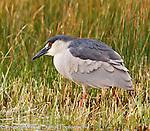 Malhuer National Wildlife Refuge