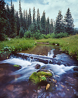 Little Colorado River along the West Fork Trail in the Mt. Baldy Wilderness; Apache-Sitgreaves National Forest, AZ