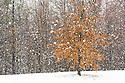 Early spring snowfall, Arnold, Maryland usa