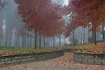 A leaf strewn path leads into Ramsey Park shrouded in fog.
