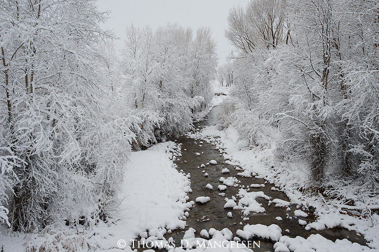 Snow blankets the a winter creek lined with trees in Grand Teton National Park, Wyoming.