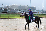 November 1, 2018: Sippican Harbor, trained by Gary Contessa, exercises in preparation for the Breeders' Cup Juvenile Fillies at Churchill Downs on November 1, 2018 in Louisville, Kentucky. Jamey Price/Eclipse Sportswire/CSM