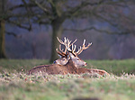 Stags back to back by David Higgins