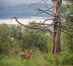 8.24.12 - A Deer Friend...