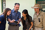 Cheetah (Acinonyx jubatus) biologists, Xia Stevens, Luke Hunter, Kim Young Overton, and Jake Overton, watching video, Kafue National Park, Zambia