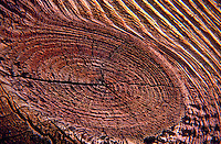 Super close up of tree bark.