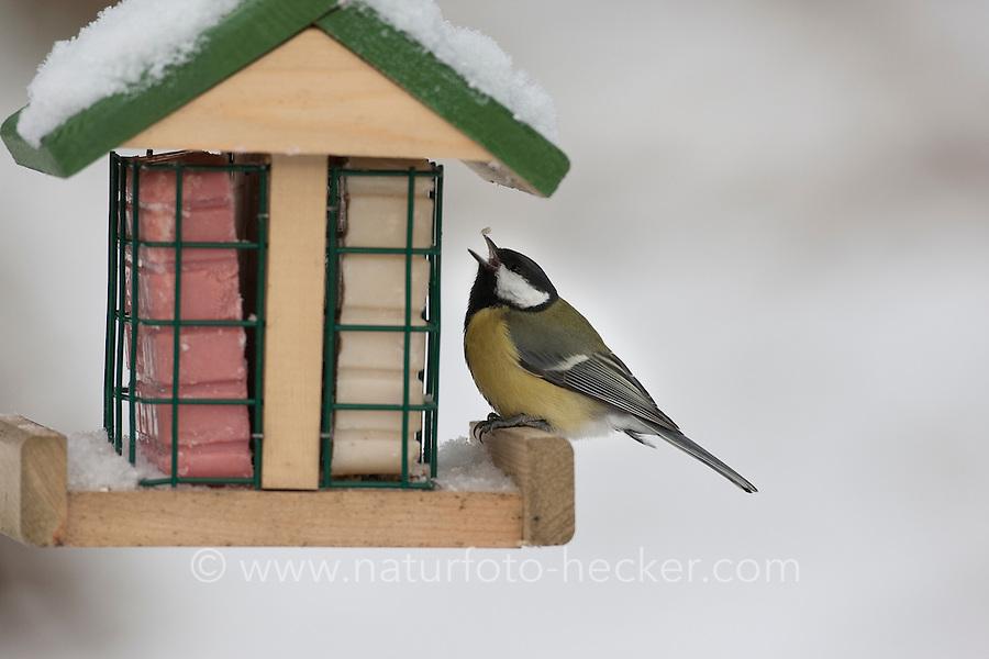 Kohlmeise, Kohl-Meise, Meise, an der Vogelfütterung, Fütterung im Winter bei Schnee, an Häuschen mit Fettfutter, Energiekuchen, Winterfütterung, Parus major, great tit