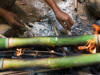 Tribal Aeta from this specific part of the Philippines cooking rice inside Bamboo in the Jungle, the Aetas are famous for their survival skills and have trained the US Armed forces in the past, Pampanga, Philippines