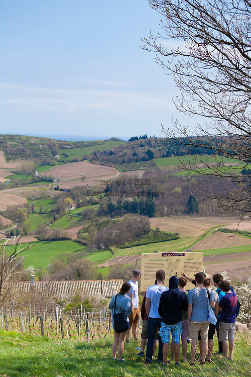 The Wine Route in early spring in Beaujolais, France. Vauxrenard, a small village, offers a well marked walking trail through the surrounding vineyards.   Winemaker Laurent Savoye leads a group of German tourists through the walking tour.