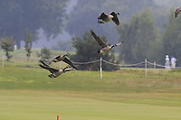Low flying geese over the 15th green during Saturday's Round 3 of the Porsche European Open 2018 held at Green Eagle Golf Courses, Hamburg Germany. 28th July 2018.<br /> Picture: Eoin Clarke | Golffile<br /> <br /> <br /> All photos usage must carry mandatory copyright credit (&copy; Golffile | Eoin Clarke)