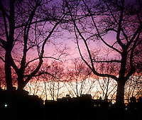 SUNSET - URBAN SKY THROUGH TREES<br />