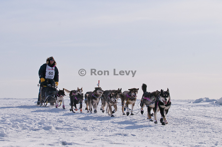 Mushing legend Rick Swenson (5-time winner) along Bering Sea near Nome, Alaska during Iditarod Dogsled Race, 2012. Rick finished in 30th place this year.