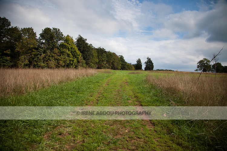Wide expanses of tall green, yellow, and red grass is a staple at Manassas National Battlefield Park in Virginia.