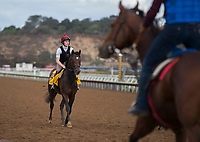 DEL MAR, CA - NOVEMBER 02: War Decree, owned by Andrew Rosen, Mrs. John Magnier, Michael Tabor & Derrick Smith and trained by Aidan P. O'Brien, exercises in preparation for Breeders' Cup Classic at Del Mar Thoroughbred Club on November 2, 2017 in Del Mar, California. (Photo by Jamey Price/Eclipse Sportswire/Breeders Cup)