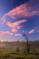 Tree at sunrise with fog at Royal Lake , Near MAnitoba - Ontario Border, Ontario, Canada