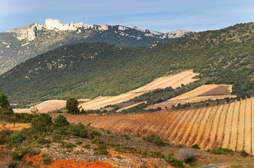 Chateau de Peyrepertuse. Chateau de Peyrepertuse. Hilltop Cathar fortification. Les Pays and Chateaux Cathares. Languedoc. The ruins of a chateau fortress. France. Europe. Vineyard.