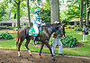 CV Lily De Cardonne before The Delaware Park Arabian Oaks (grade II) at Delaware Park on 8/6/16