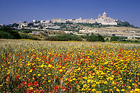 Mdina, Malta. Wildflowers, Poppies, Hilltop, City Walls, Church.