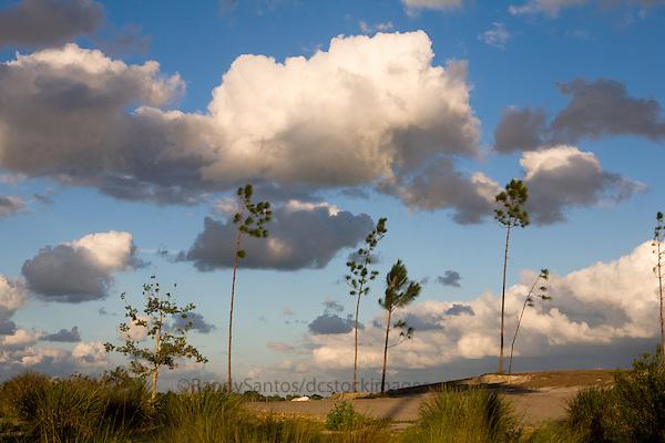 Florida Nature