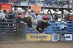 2013 Cody Wyoming X-Bulls