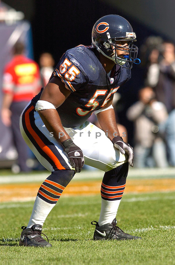 Lance Briggs, of the Chicago Bears, in action against the Minnesota Vikings during their game on October 16, 2005...Bears win 28-3..Chris Bernacchi/SportPics