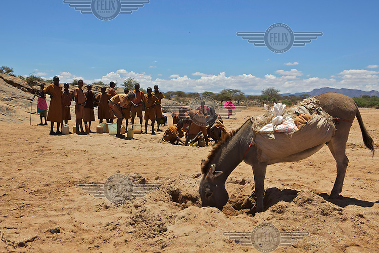 Kids from Kipsing school come to fetch water from a shallow well on the Kipsing river. Isiolo West.Kenya