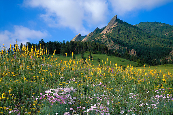 Flatirons rock formation and wildflowers in Chautauqua Park, Boulder, Colorado, USA. .  John leads private photo tours in Boulder and throughout Colorado. Year-round Colorado photo tours.