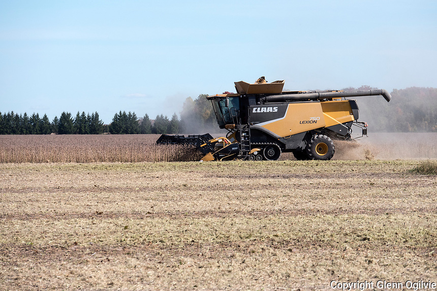 Harvesting soya beans along Brigden Sidereal
