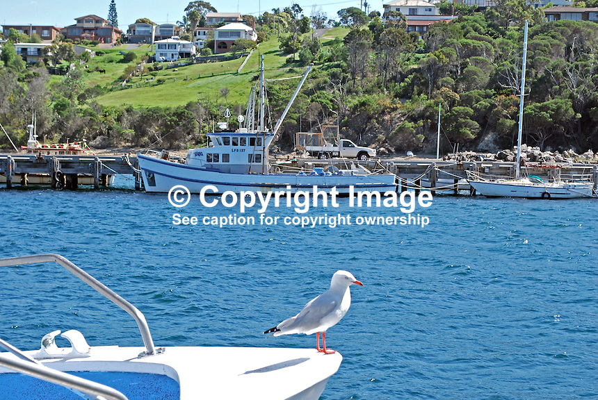 Harbour, fishing port, Eden, New South Wales. Australia, former whaling station. 201003224860..Copyright Image from Victor Patterson, 54 Dorchester Park, Belfast, United Kingdom, UK. Tel: +44 28 90661296. Email: victorpatterson@me.com; Back-up: victorpatterson@gmail.com..For my Terms and Conditions of Use go to www.victorpatterson.com and click on the appropriate tab.