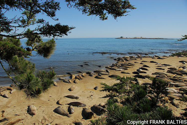 Elephant seals on North Bight Beach at AnoNuevo State Park