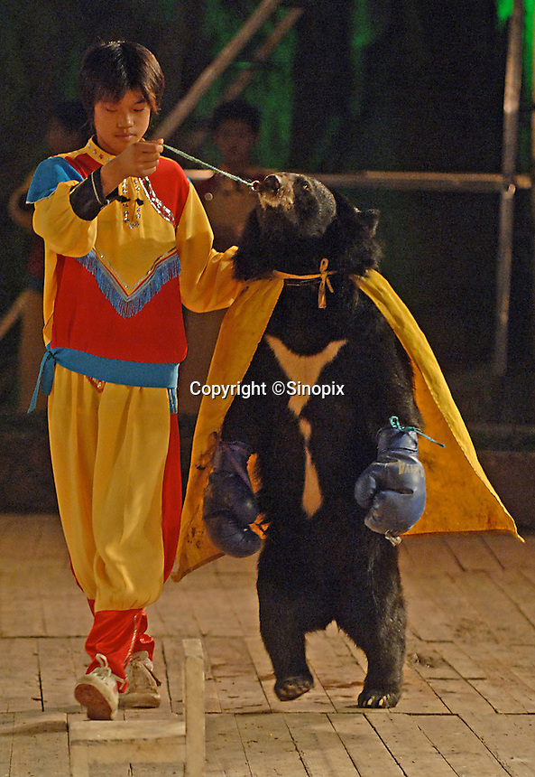An Asian brown bear called Wei Wei, enters the boxing ring wearing blue gloves and a cape prior to a bizaarre bear boxing spectacle held twice daily at a Chinese wildlife park that describes itself as a bear sanctuary in Guanxi Province, China...SINOPIX PHOTO
