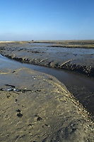Mudflats, Pagham Harbour, West Sussex, UK