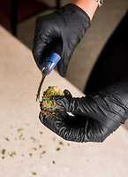 Trimmer Taylor Shirley (cq) trims marijuana buds at a Good Meds Network grow house in Denver, Colorado, Monday, July 21, 2014. <br /> <br /> Photo by Matt Nager