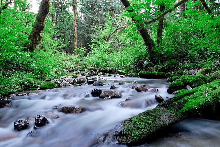 Forest stream, Index, WA.