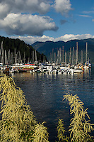 Boats moored at jetty with the trees of the Cove forest in the background. Deep Cove, Burrard Inlet, Vancouver, British Columbia, Canada.