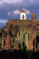 Europe/Espagne/Canaries/Lanzarote/Guatiza : Le jardin de cactus conçu par Cesar Manrique et le moulin