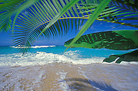 Palms, white sand beach, and blue ocean at Ehukai Beach, North Shore of Oahu