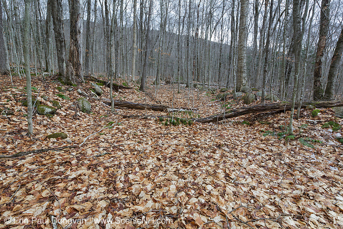 This is possibly the old railroad grade of the Hardwood Ridge Branch of the Gordon Pond Railroad (1907-1916) in North Lincoln, New Hampshire. This was a logging railroad owned by the Johnson Lumber Company.