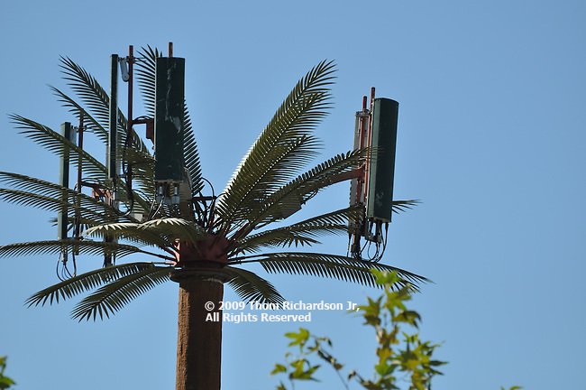 CA Cell Phone Tree - Los Angeles Cell phone cells diguised as a natural tree Cellular Tree/Antennae,