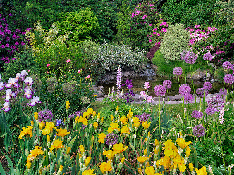 Pond with flower garden. Schrieners Iris Gardens, Salem, Oregon.