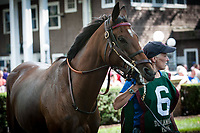 WILMINGTON, DE - JULY 8: Guilty Twelve #6 in the paddock before winning the G3 Robert Dick Memorial at Delaware Park in Wilmington, Delaware. (Photo by Sophie Shore/Eclipse Sportswire/Getty Images)