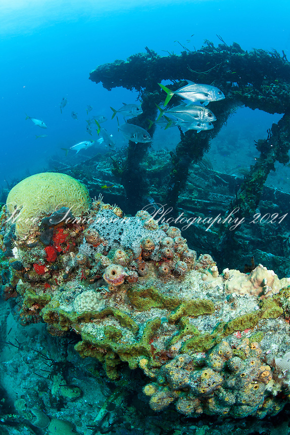Wreck of the RMS Rhone.Salt Island.British Virgin Islands