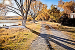 Through golden leaves the morning sun casts shortening shadows across the lake side track that provides access to quaint Lake Alexandrina cribs.. This New Zealand Fine Art Landscape Print, available in four sizes on either archival Hahnemuhle Fine Art Pearl paper or canvas, is printed using Epson K3 Ultrachrome inks and comes with a lifetime guarantee against fading..All prints are signed and numbered on the lower margin and come with my 100% money back guarantee on the purchase price, should you not be  completely happy with the quality of the delivered print or canvas.