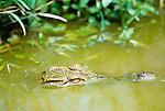 Crocodile, Madagascar