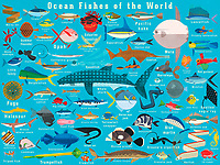 Illustration of lots of ocean fish from around the world