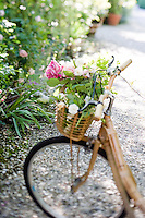 Detail of freshly cut roses in an old-fashioned bicycle's wicker basket